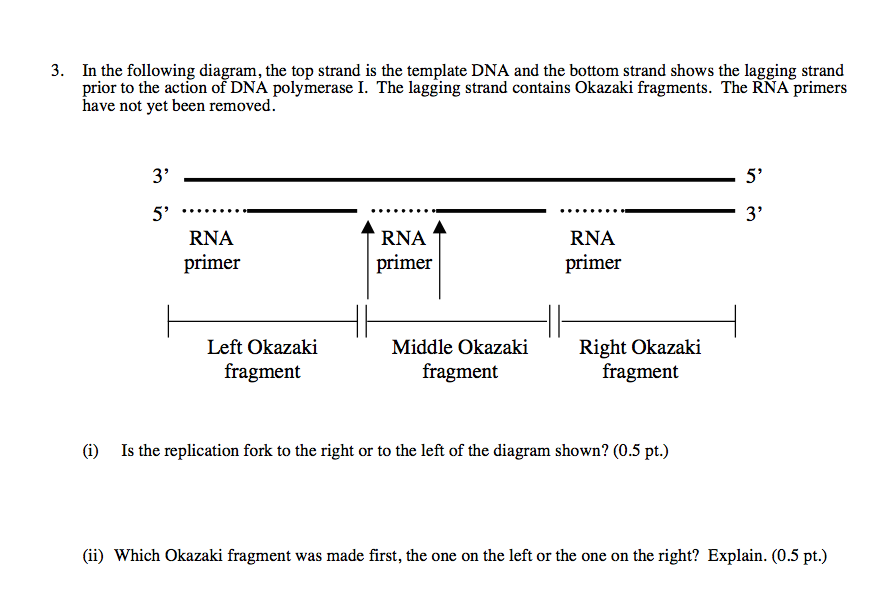 3 in the following diagram the top strand is the chegg in the following diagram the top strand is the template dna pronofoot35fo Image collections