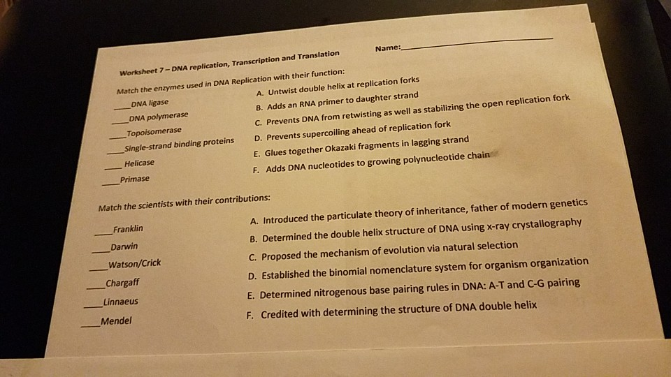 Name: Worksheet 7-DNA replication Transcription and Translation Match the enzymes used in & Name: Worksheet 7-DNA Replication Transcription A...   Chegg.com ngosaveh.com