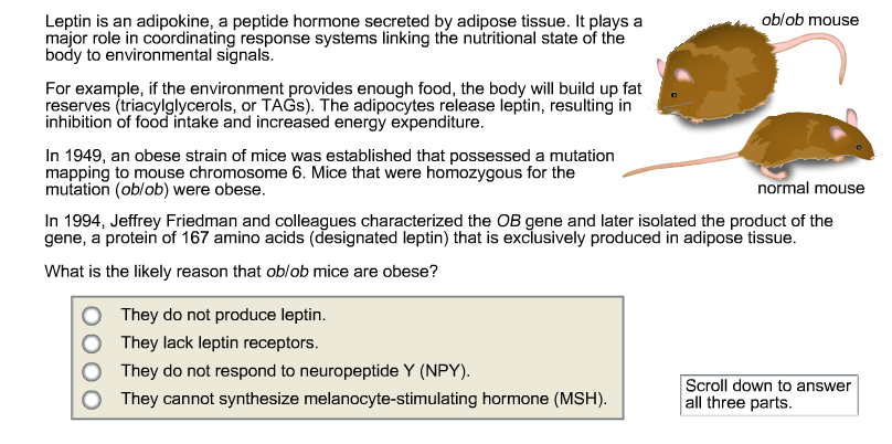 Solved Leptin Is An Adipokine A Peptide Hormone Secreted