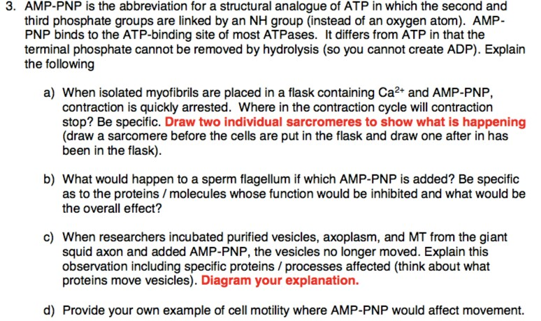 Solved: AMP-PNP Is The Abbreviation For A Structural Analo ...