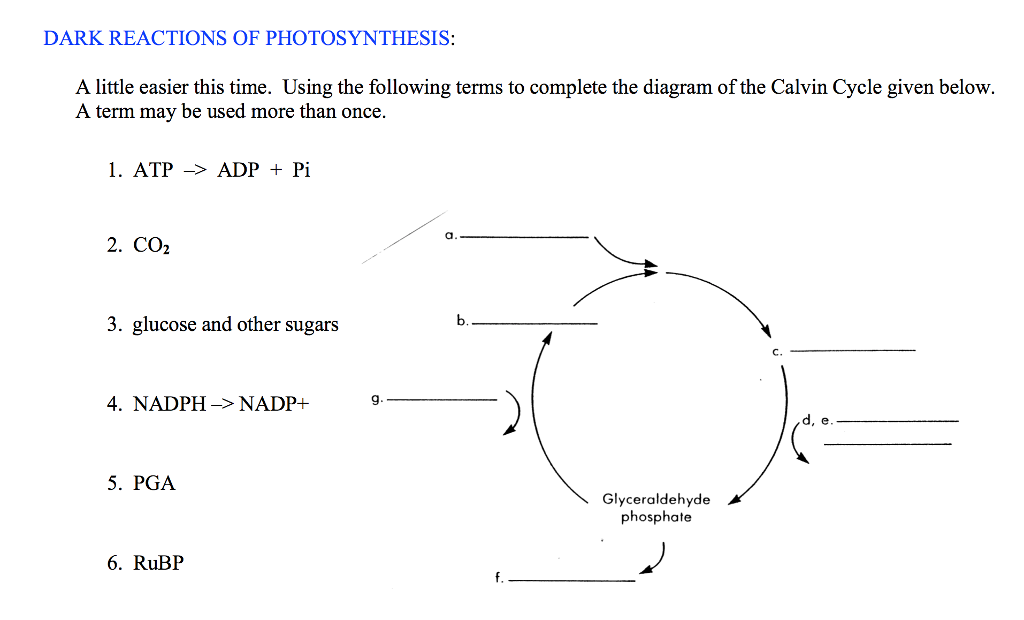 Solved dark reactions of photosynthesis a little easier dark reactions of photosynthesis a little easier this time using the following terms to ccuart Image collections