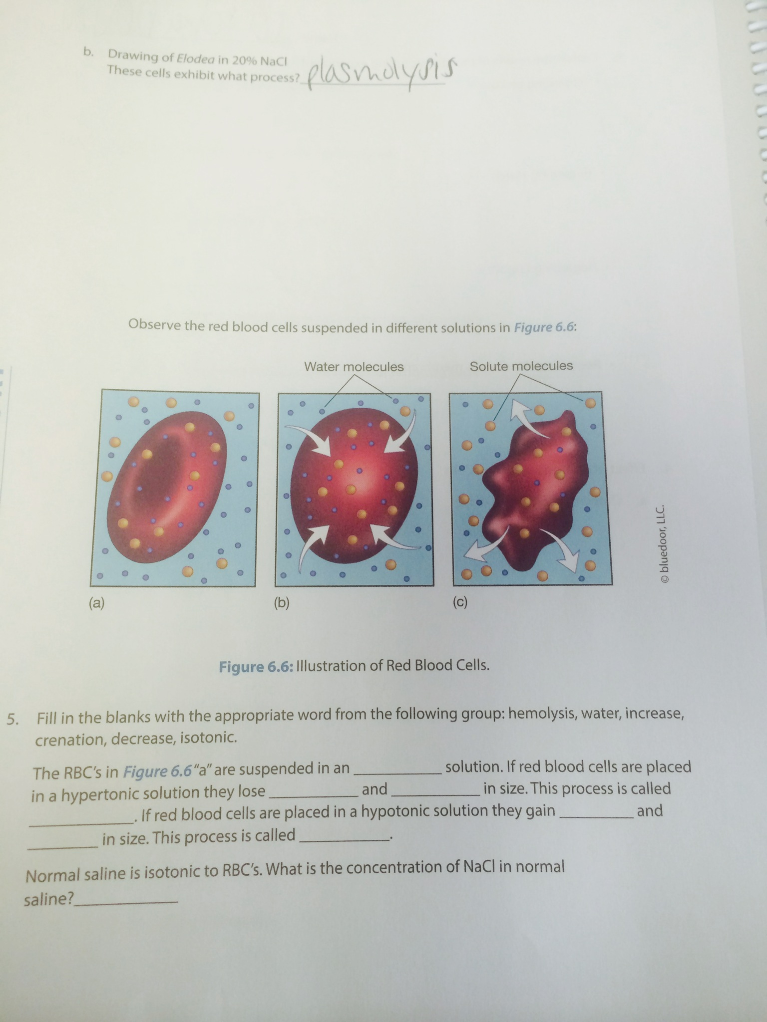 Exercise 4 Cellbiologyolm What Is A Hypotonic Solution