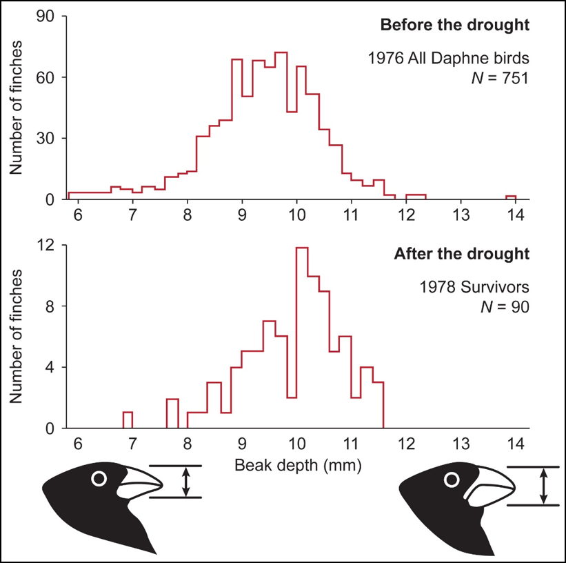 Solved: Evolution Can Be Observed Directly, As In The Famo ...