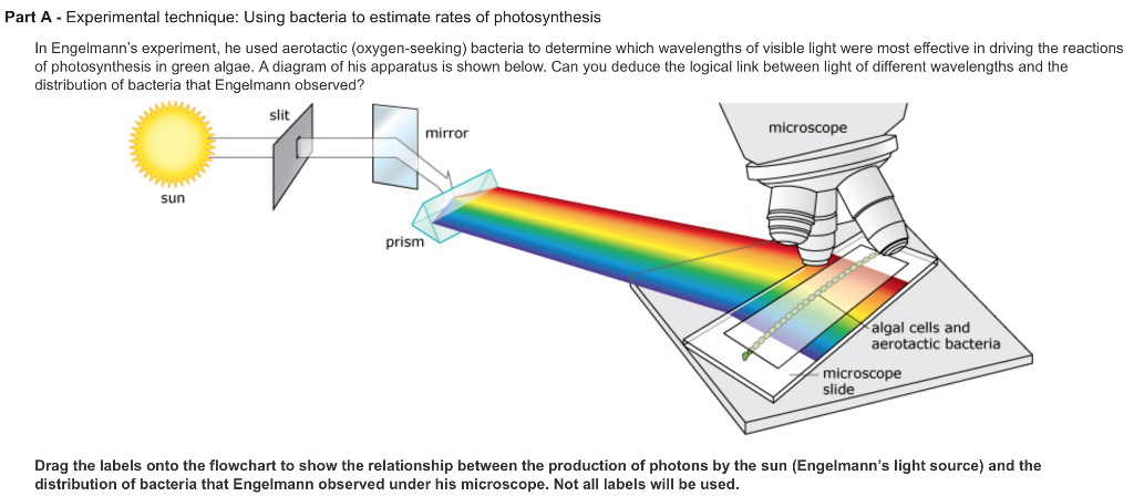 photosynthesis and experimental question Photosynthesis is the process by which plants, some bacteria, and some  protistans  a common aquarium plant used in lab experiments about  photosynthesis  of arizona) provides an excellent resource with online  question/answer and.