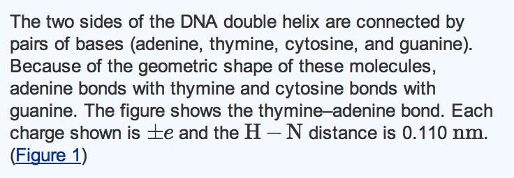 The two sides of the DNA double helix are connecte