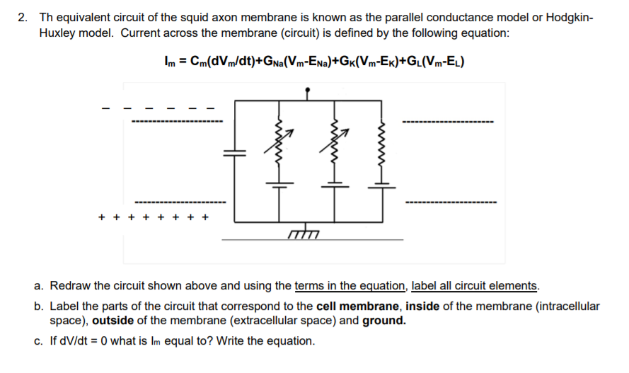 Solved 2 th equivalent circuit of the squid axon membran th equivalent circuit of the squid axon membrane is known as the paralilel conductance ccuart Choice Image