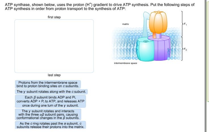 Atp synthase shown below uses the proton h gr chegg com