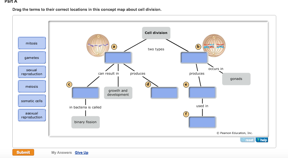Homework help dna concept mapping