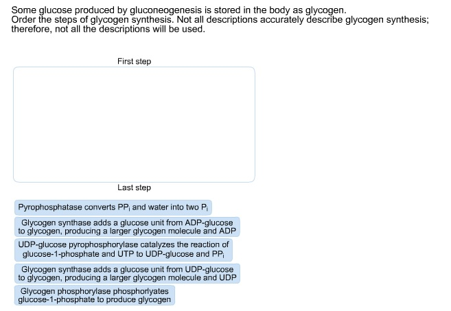 Some glucose produced by gluconeogenesis is stored