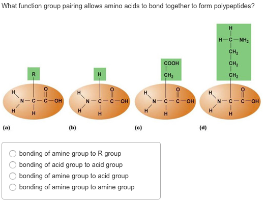 What Function Group Pairing Allows Amino Acids To ...   Chegg.com