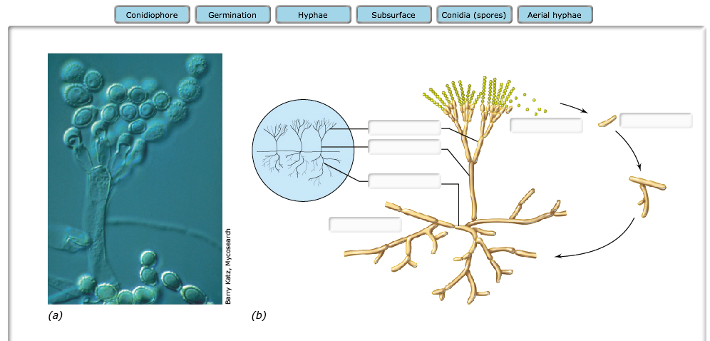 fungi homework