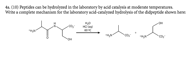 Solved: 4b (10) Enzymes Catalyze Peptide Hydrolysis By Sev ...