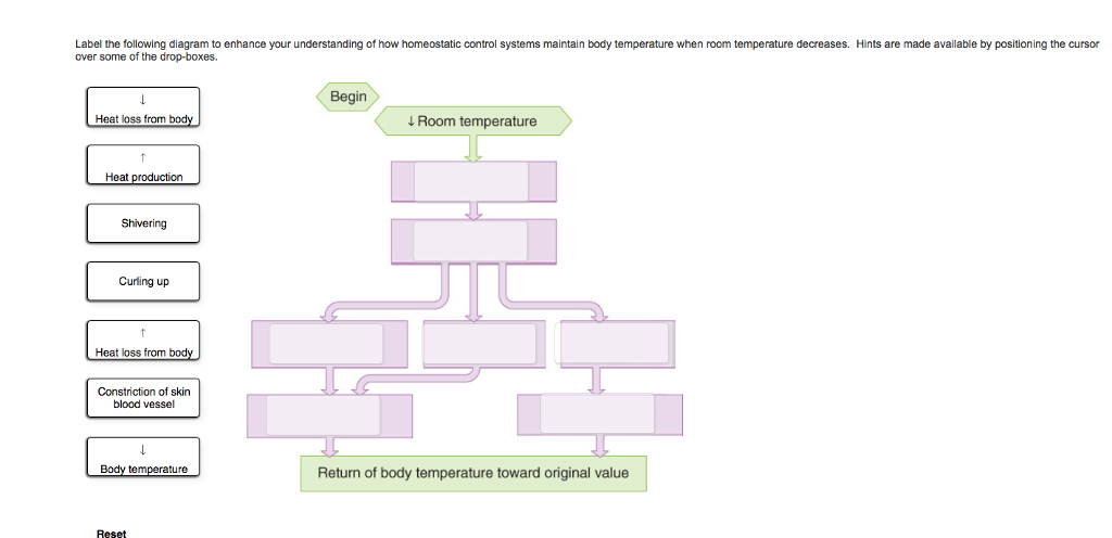 Describe process of thermoregulation Complete the sentences describing the  role of skin in regulation of body