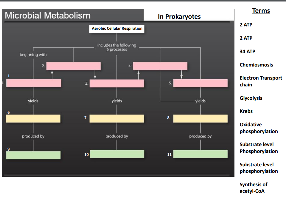 Solved terms microbial metabolism in prokaryotes 2 atp 2 terms microbial metabolism in prokaryotes 2 atp 2 atp 34 atp chemiosmosis aerobic cellular respiration includes ccuart Image collections