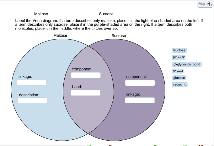 Solved maltose sucrose label the venn diagram if a term question maltose sucrose label the venn diagram if a term describes only maltose place it in the lig ccuart Images