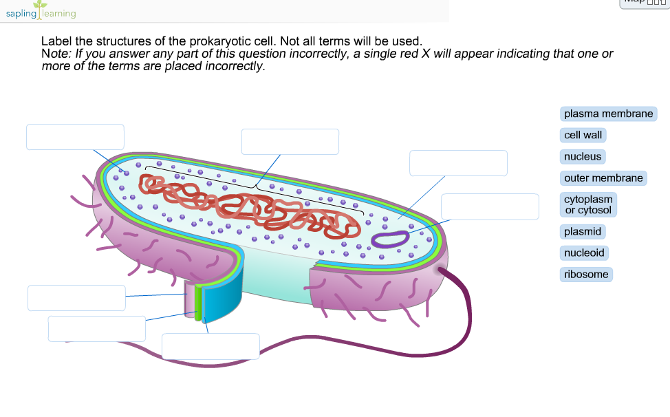Plant and Animal Cell Worksheets  Teachnologycom