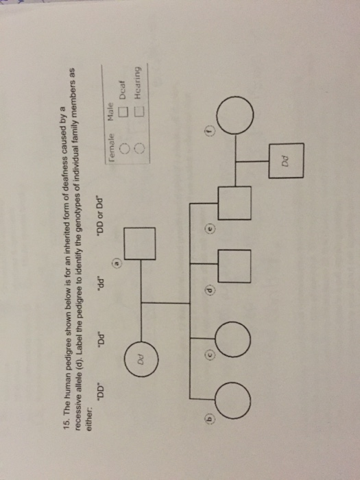 pedigree analysis questions and answers pdf