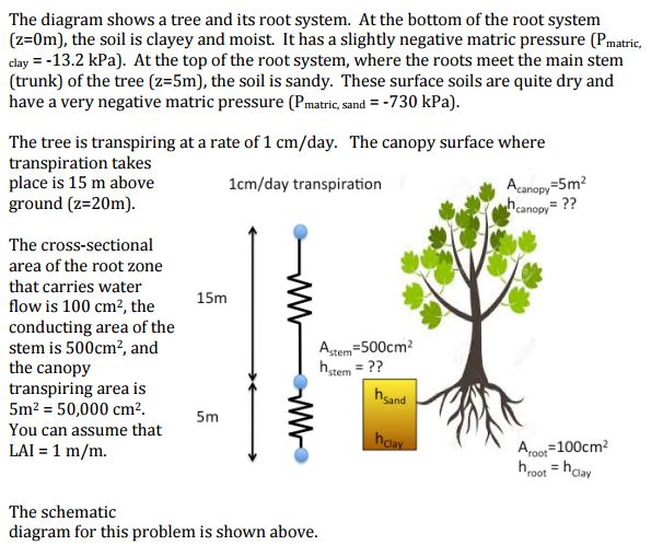 the diagram shows a tree and its root system at t chegg com rh chegg com aspen root system diagram fibrous root system diagram