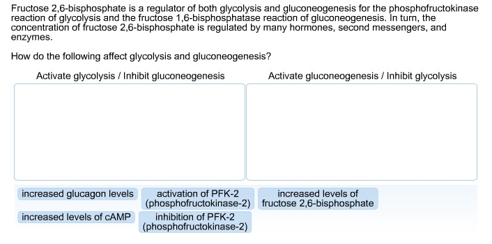Fructose 2,6-bisphosphate is a regulator of both g