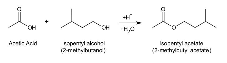 Isopentyl alcohol nmr