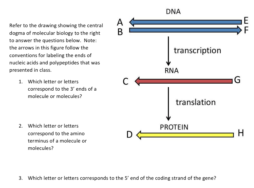 Solved Refer To The Drawing Showing The Central Dogma Of