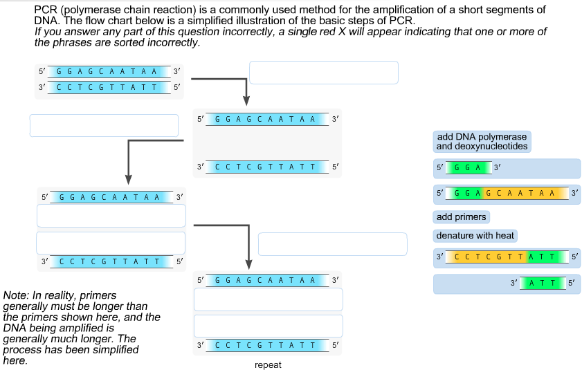 PCR (polymerase Chain Reaction) Is A Commonly Used...   Chegg.com