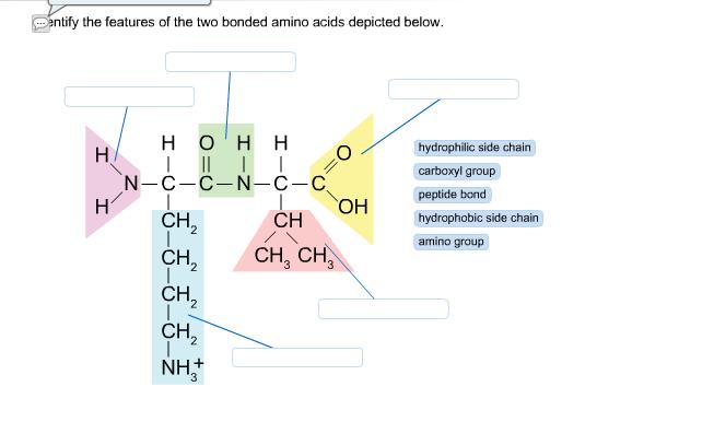 identification of amino acids 35 chapter 3 chemical properties of amino acids and identification of unknown amino acids sam donovan, carl stiefbold, and karen sprague department of biology.