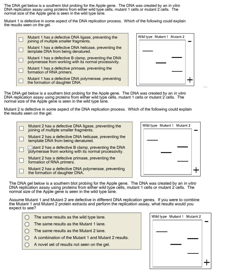 Molecular biology worksheet answer key