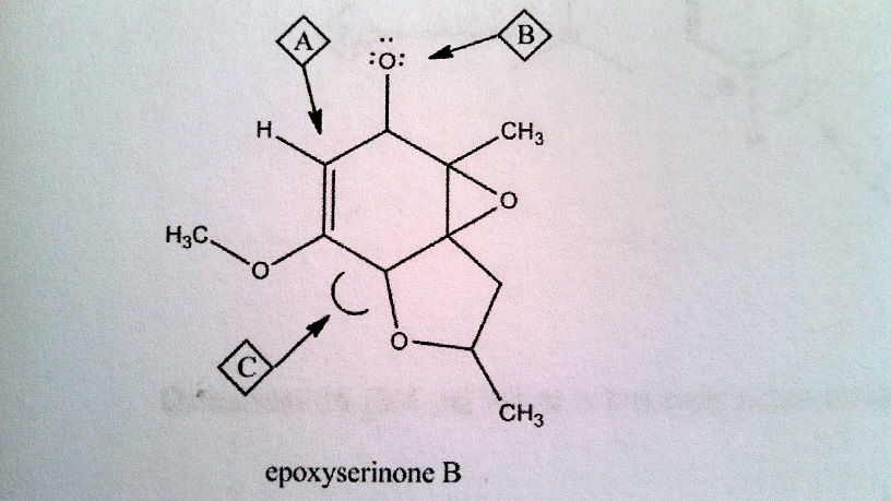 The epoxyserinones represent some of th efirst com