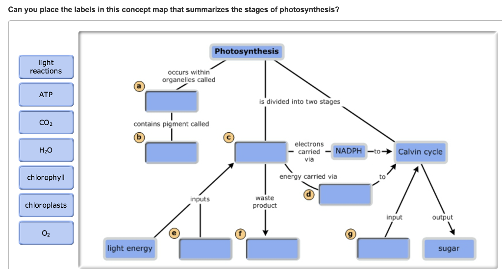 concept map on photosynthesis A concept map is a diagram or graphical tool that visually represents relationships between concepts and ideas, such as a photosynthesis concept map create your own photosynthesis concept map with this template by signing up for a free lucidchart account.