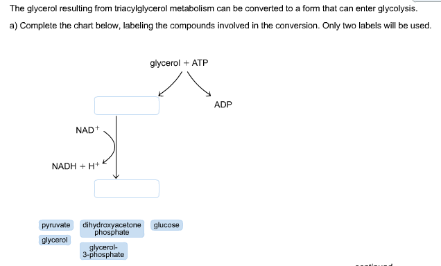 The Glycerol Resulting From Triacylglycerol Metabo... | Chegg.com