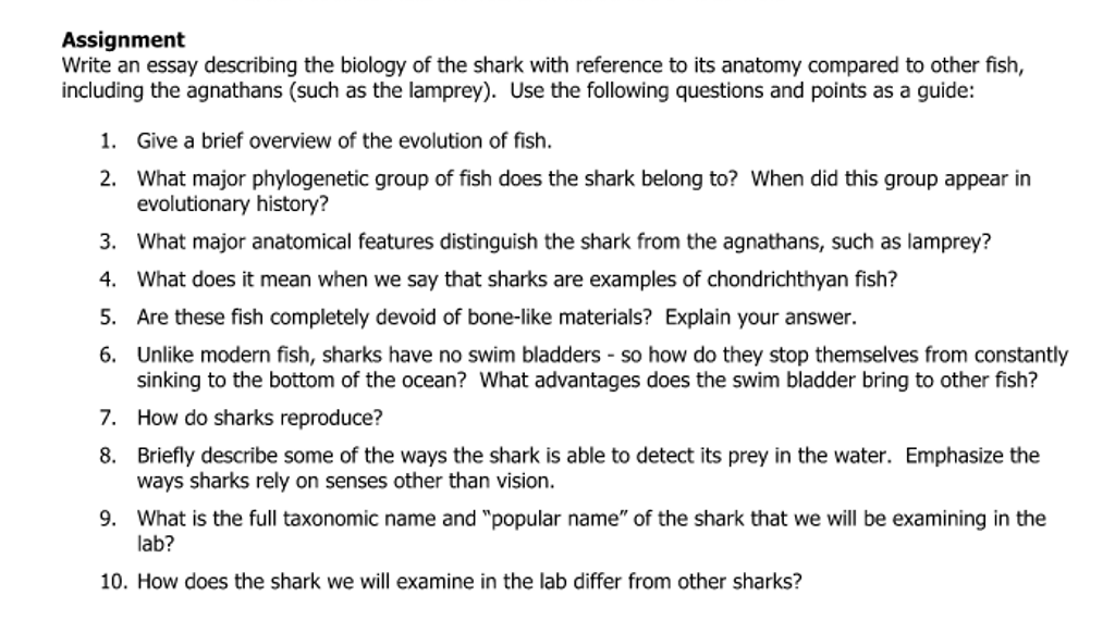 the shark net essay The shark net has 1,145 ratings and 90 reviews nick said: i don't remember very much about this book i purchased it in a bookstore in rome, one of the.