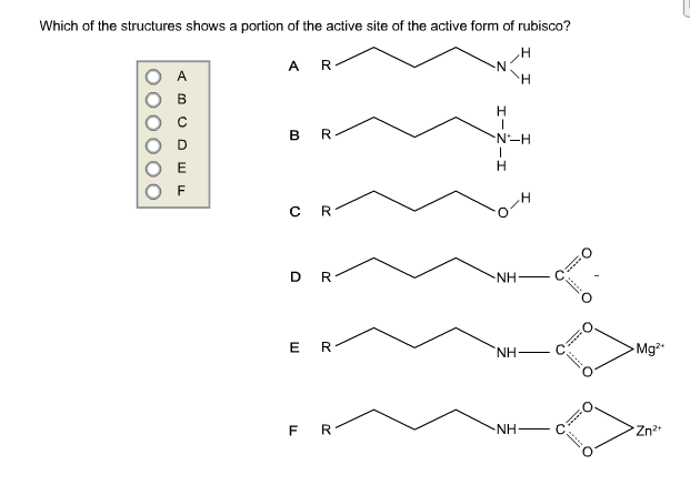 Which Of The Structures Shows A Portion Of The Act... | Chegg.com