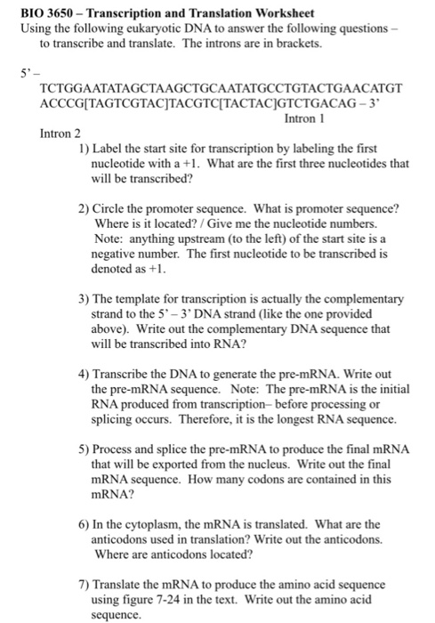 Solved: BIO 3650- Transcription And Translation Worksheet ...