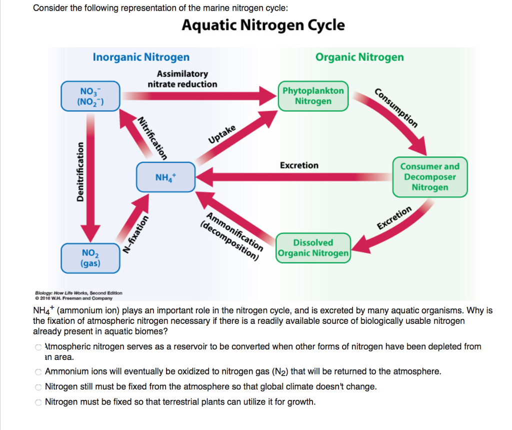 Solved consider the following representation of the marin consider the following representation of the marine nitrogen cycle aquatic nitrogen cycle organic nitrogen inorganic pooptronica Choice Image