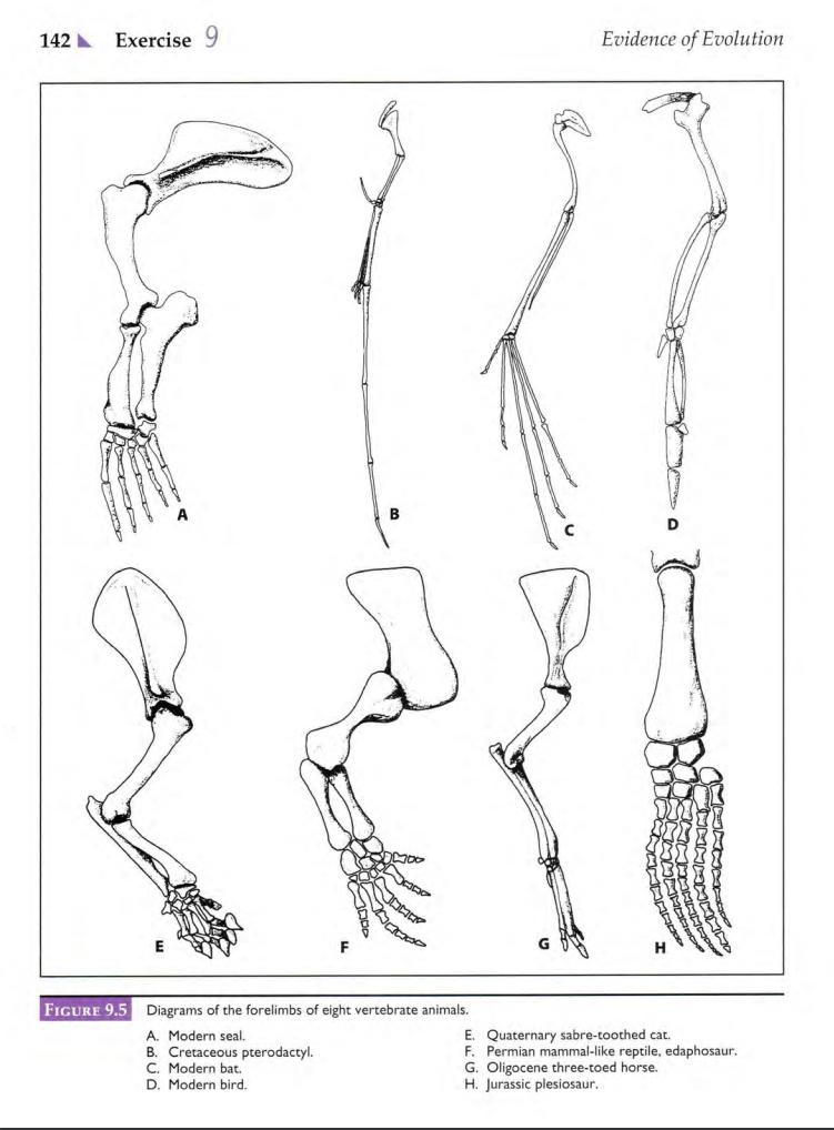 solved after examining the diagram of a human skeleton in rh chegg com Bat Skeleton Diagram harp seal skeleton diagram