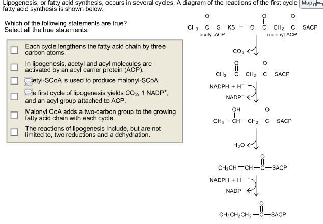 lipogenesis  or fatty acid synthesis  occurs in se      chegg comshow transcribed image text lipogenesis  or fatty acid synthesis  occurs in several cycles  a diagram of the reactions of the first cycle fatty acid