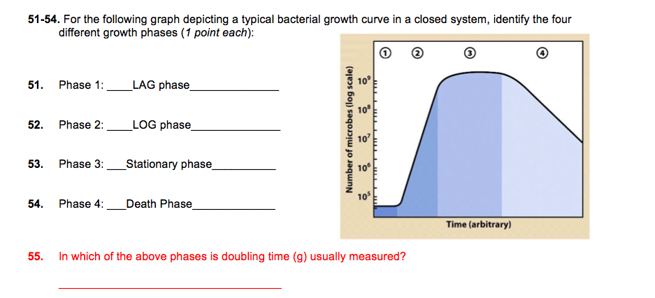 an overview of bacterial growth Growth of bacterial populations growth of bacterial cultures is defined as an increase in the number of bacteria in a overview.
