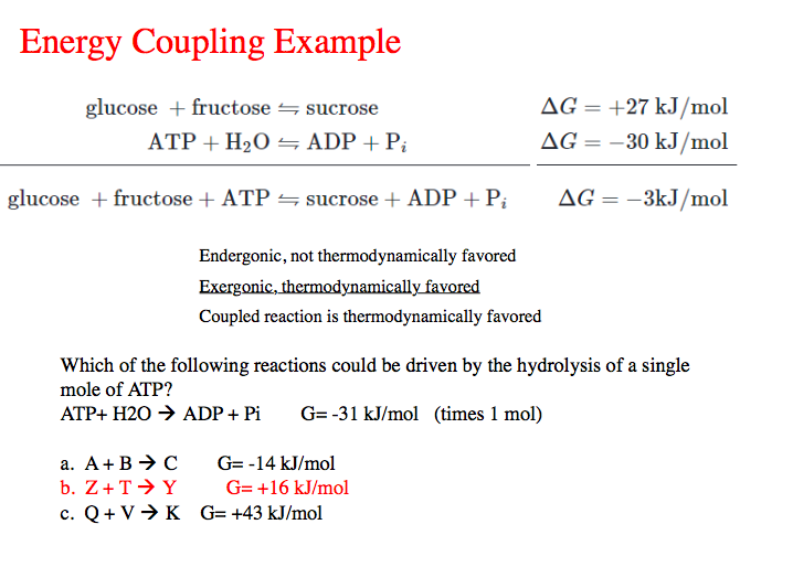 Solved: Energy Coupling Example Glucose + Fructose ATP + H ...