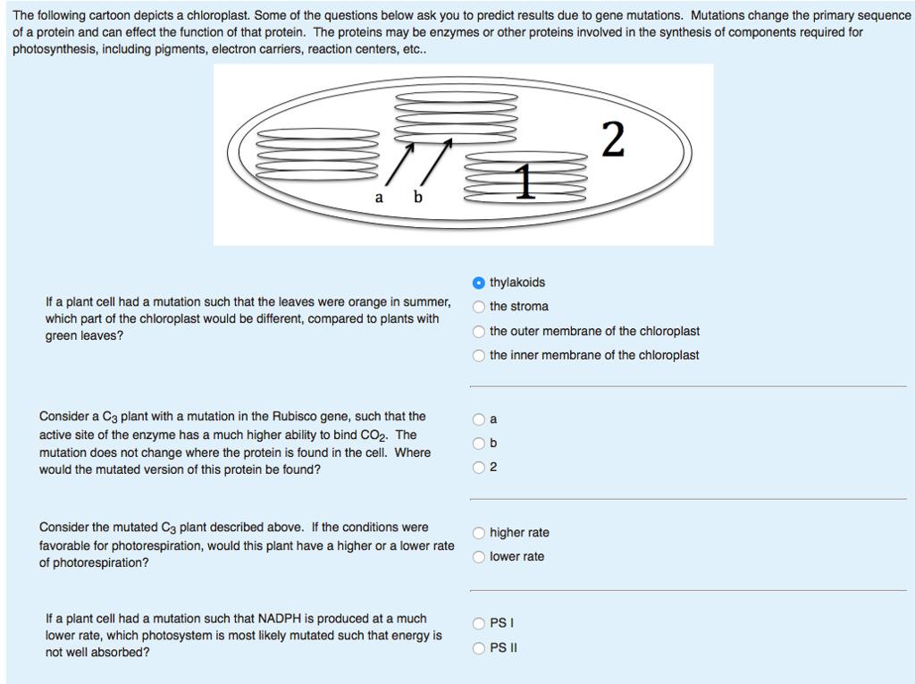 chloroplast function user manuals