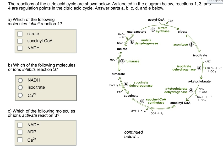 Citric Acid Cycle Diagram of The Citric Acid Cycle
