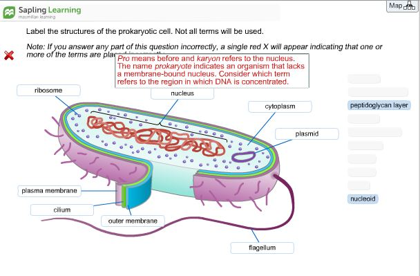 Label the structures of the prokaryotic cell not chegg map sapling learning label the structures of the prokaryotic cell not all terms will be ccuart Choice Image