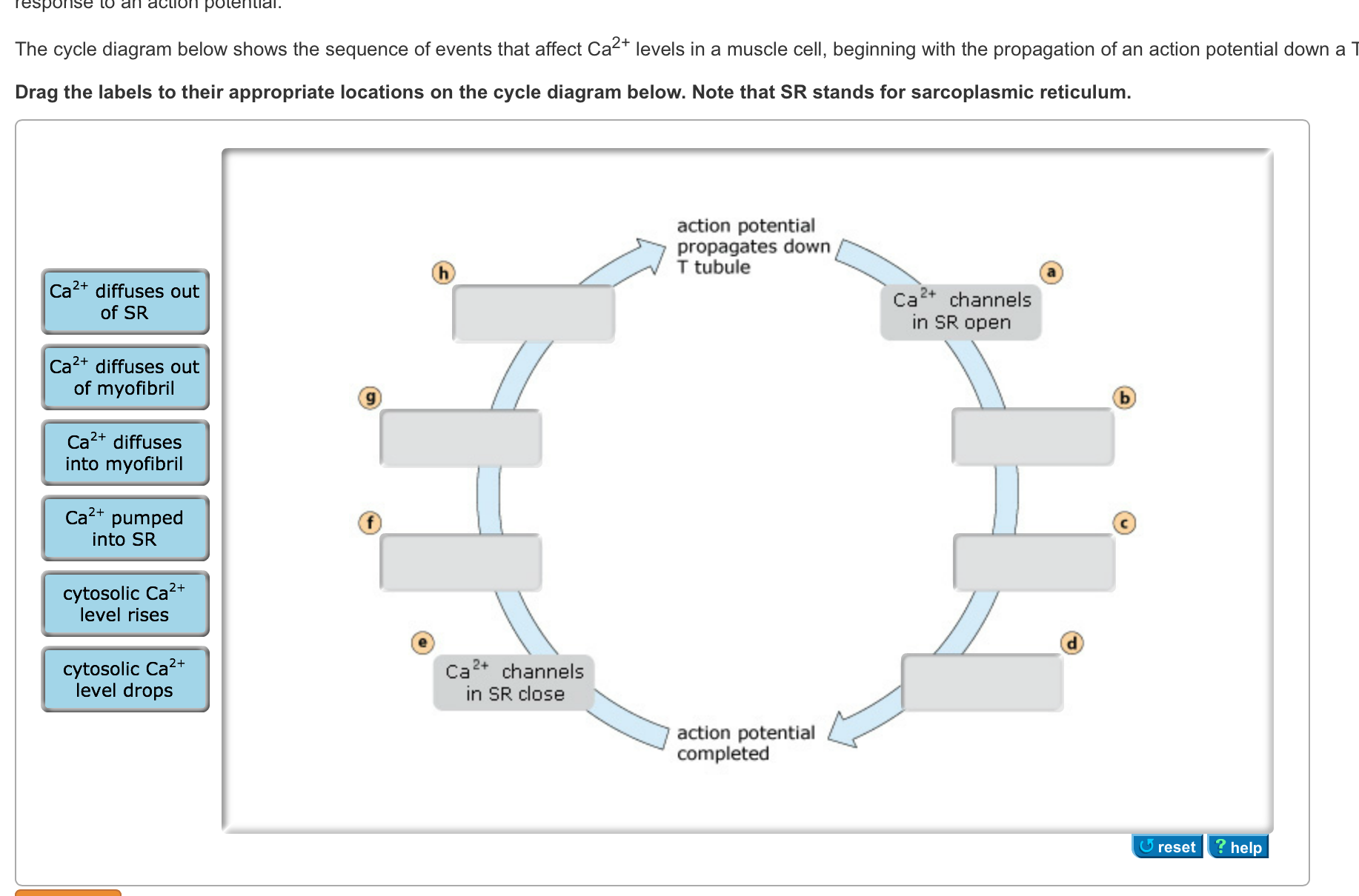 Solved the cycle diagram below shows the sequence of even image for the cycle diagram below shows the sequence of events that affect ca2 ccuart Images