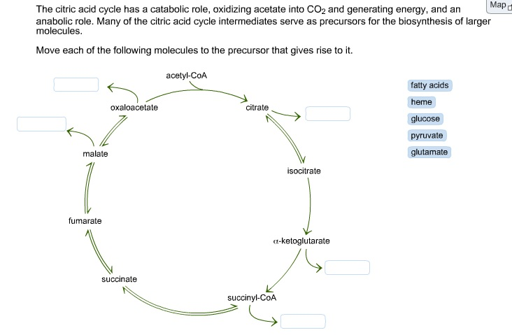 Citric Acid Cycle Structures The Citric Acid Cycle Has a