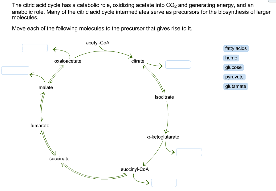 Citric Acid Cycle Diagram The Citric Acid Cycle Has a