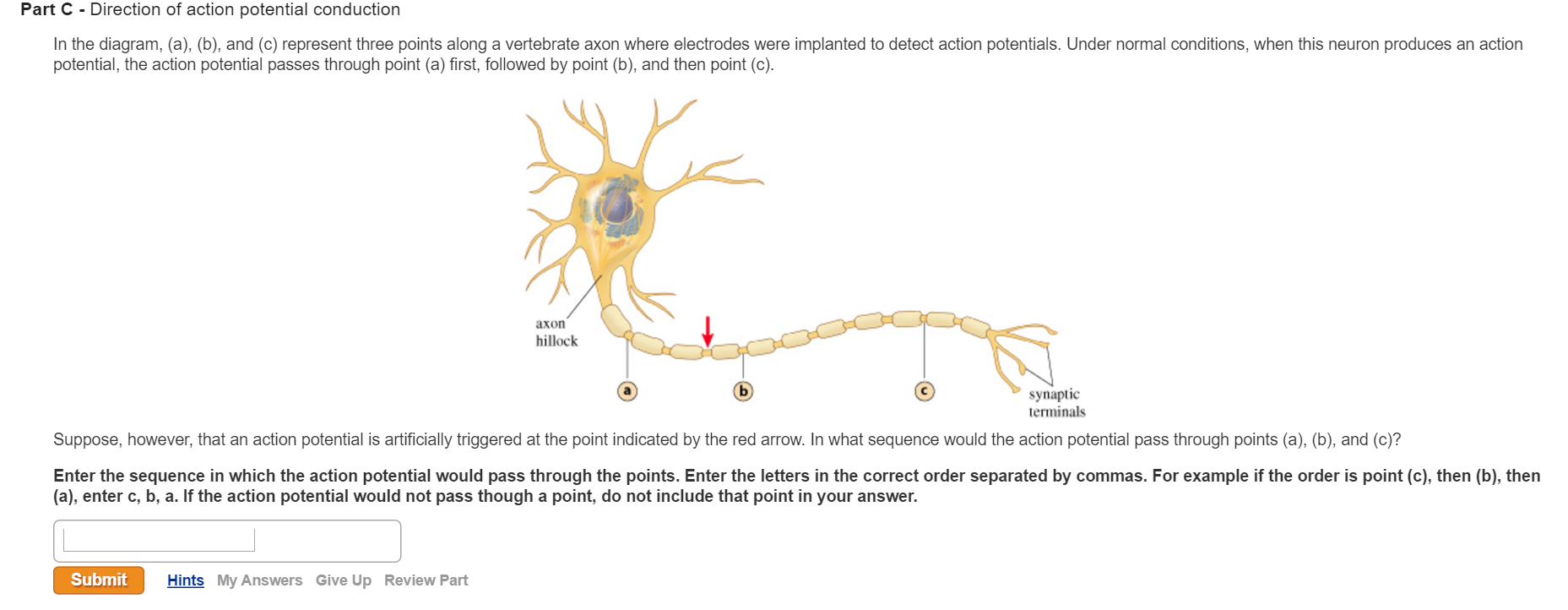 neuron and correct answer Take the short neuron quiz at the bottom of the page, and correctly answer these questions: 1 neuron part that releases neurotransmitters into the synaptic cleft presynaptic terminal 2 fatty material that surrounds some axons ____myelin_______________________ 3 takes information away from the cell body.