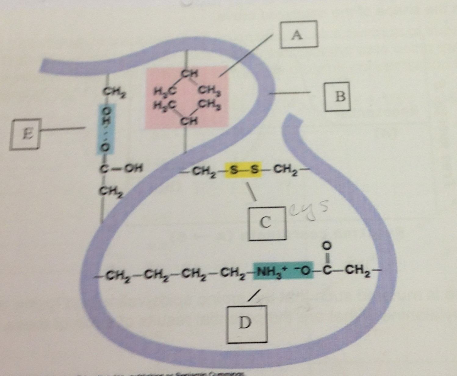 identify an amino acid In the structure shown at the top of the page, r represents a side chain specific to each amino acid the carbon atom next to the carboxyl group (which is therefore numbered 2 in the carbon chain starting from that functional group) is called the α-carbonamino acids containing an amino group bonded directly to the alpha carbon are referred.