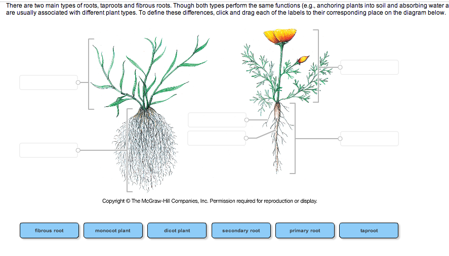 Solved there are two main types of roots taproots and fi question there are two main types of roots taproots and fibrous roots though both types perform the same ccuart Image collections