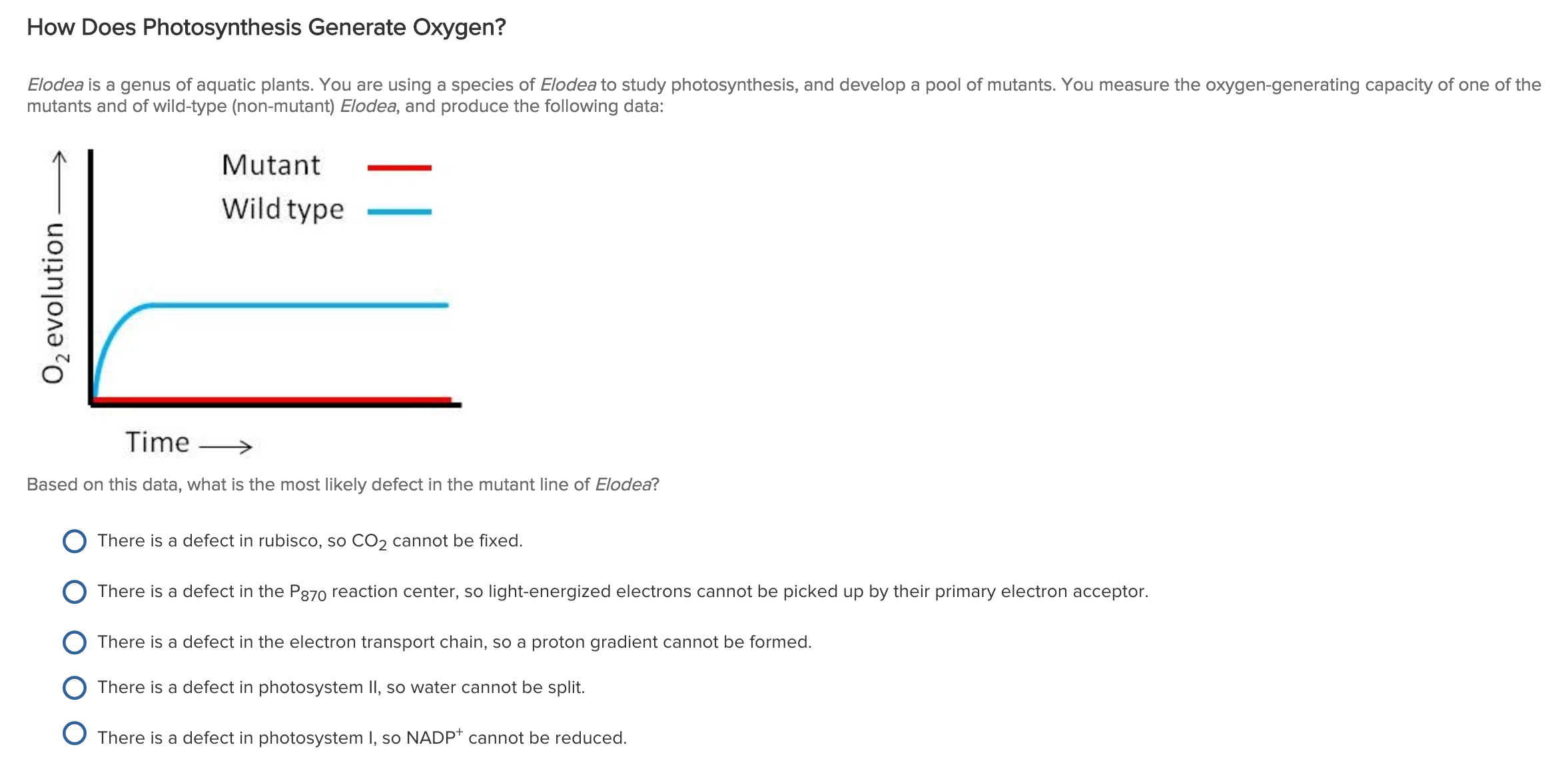 photosynthesis of elodea Photosynthesis rate quiz while elodea is undergoing photosynthesis and releasing oxygen, it is also using oxygen for aeroboc respiration a true b false.
