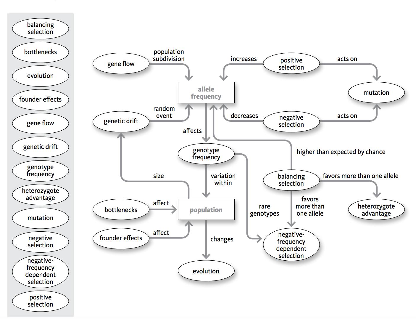 solved mechanisms of evolution explain the flow chart h
